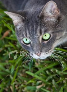 cat hyperesthesia treatment